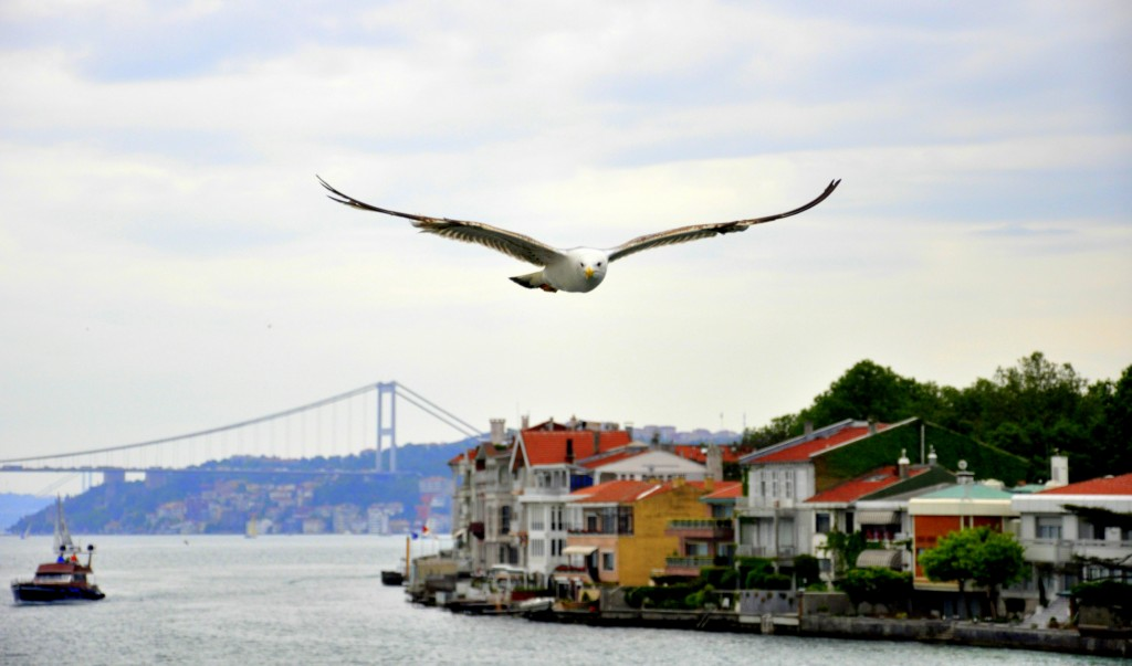 Seagull Over The Bosphorus , Istanbul. History Of Istanbul And Rome
