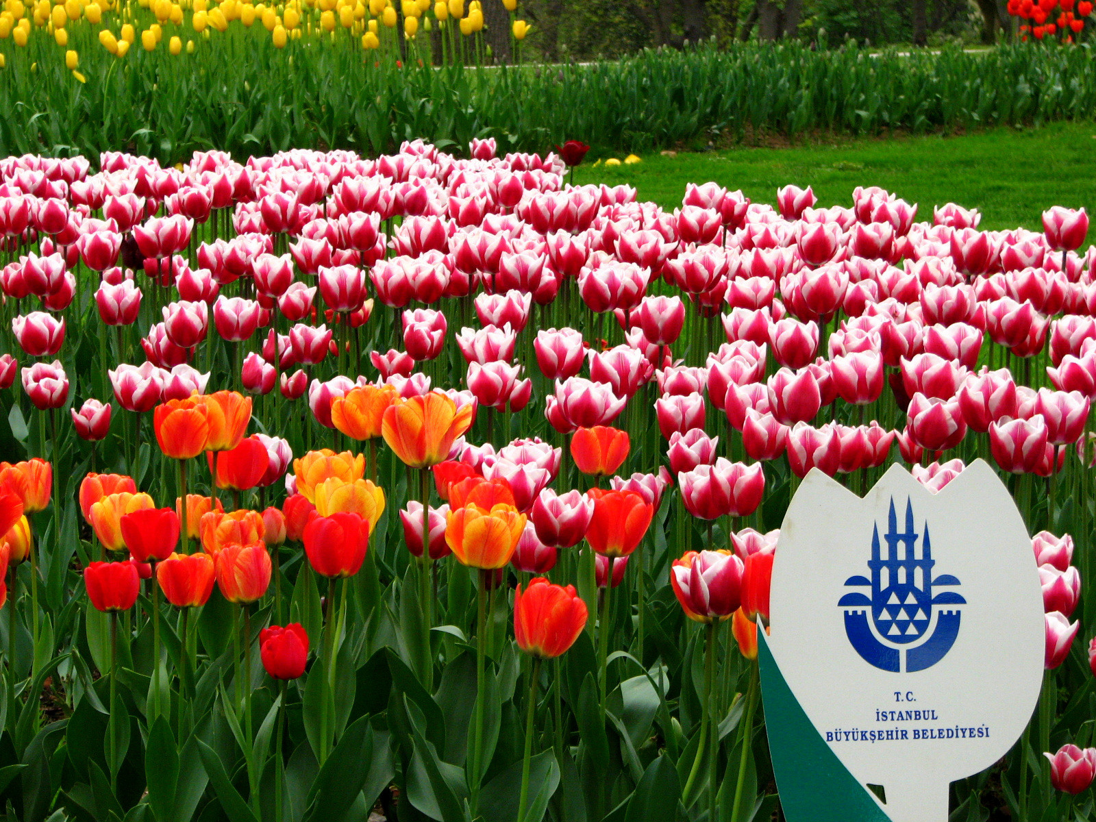 Istanbul Weather In Spring & Best Time To Visit Istanbul Tulip Festival