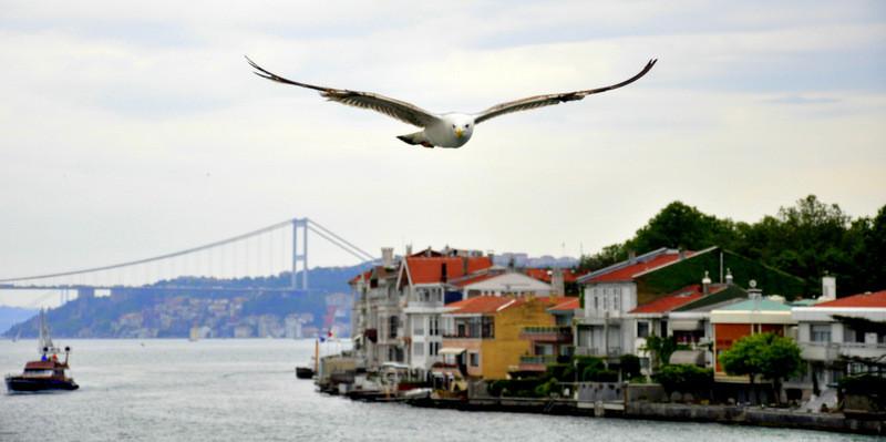 İstanbul Kişiye Özel Rehberli Turlar Boğaz Turu Ve Gezisi